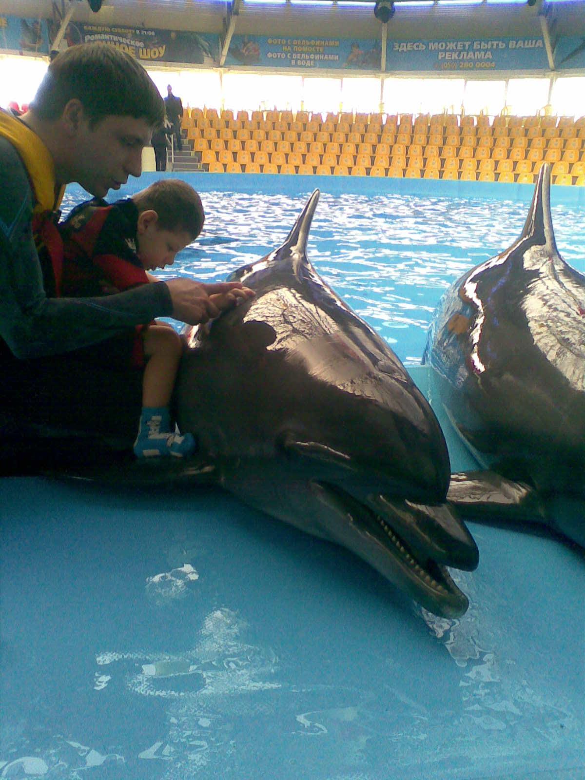 Фото дельфина для ребенка